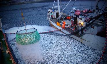 Промышленная добыча рыбы