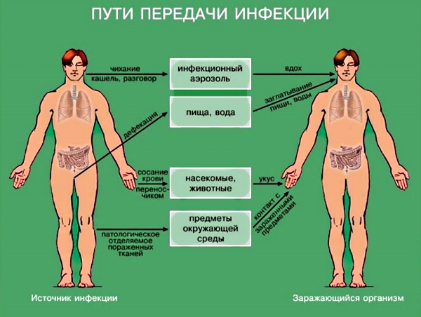 Пути передачи инфекции инфекции