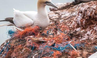 Предотвращение загрязнения моря